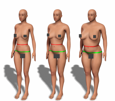 Waist and hips for women with various body types.