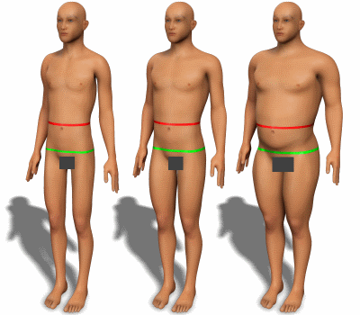 Waist and hips for men with various body types.